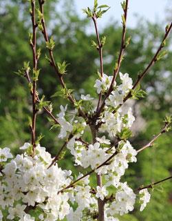 Spring In Uzbekistan